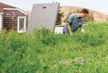 Living Roof Example