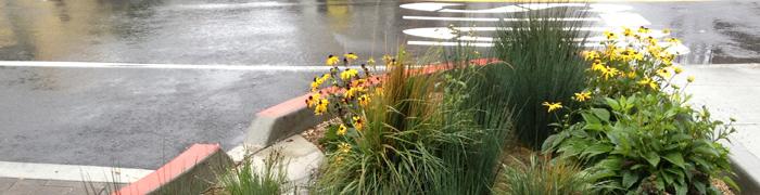 greenery along sidewalk
