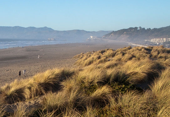 view of ocean beach and dune grass