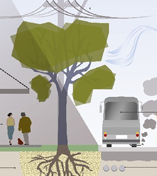 Urban Forest Plan Phase 1 - Street Trees
